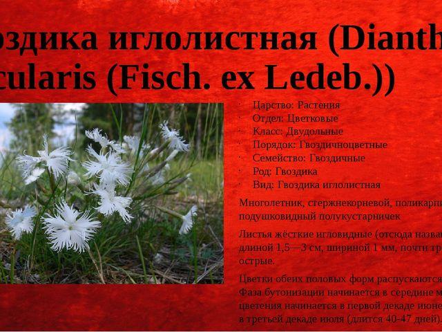 Гвоздика иглолистная (Dianthus acicularis (Fisch. ex Ledeb.)) Царство: Растен...