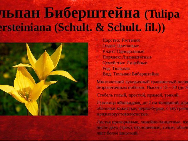 Тюльпан Биберштейна (Tulipa biebersteiniana (Schult. & Schult. fil.)) Царство...