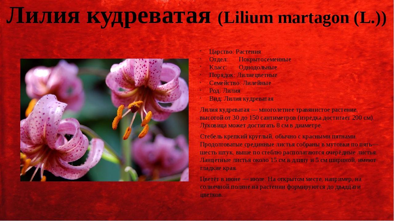 Какое значение растений в природе?