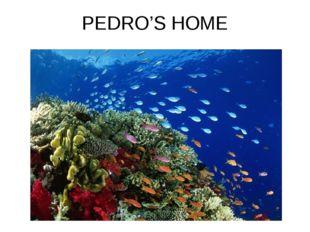 PEDRO'S HOME