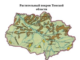 Растительный покров Томской области