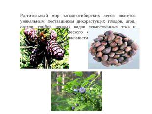 Растительный мир западносибирских лесов является уникальным поставщиком дикор
