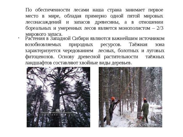 По обеспеченности лесами наша страна занимает первое место в мире, обладая пр...