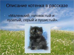 Описание котенка в рассказе «Маленький, головастый и пузатый, серый и пушисты