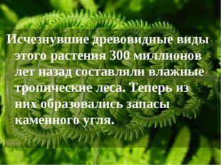 Исчезнувшие древовидные виды этого растения 300 миллионов лет назад составлял