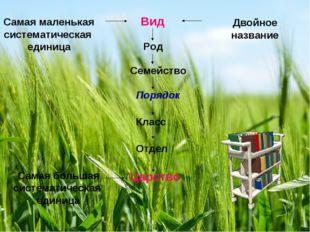 Вид Род Семейство Порядок Класс Отдел Царство Самая маленькая систематическая