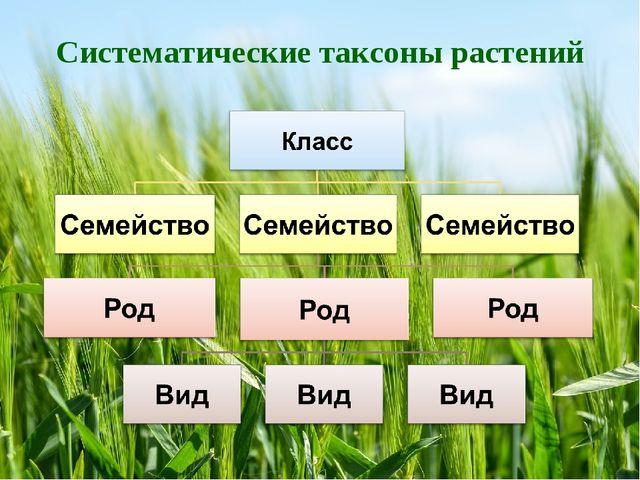 Систематические таксоны растений