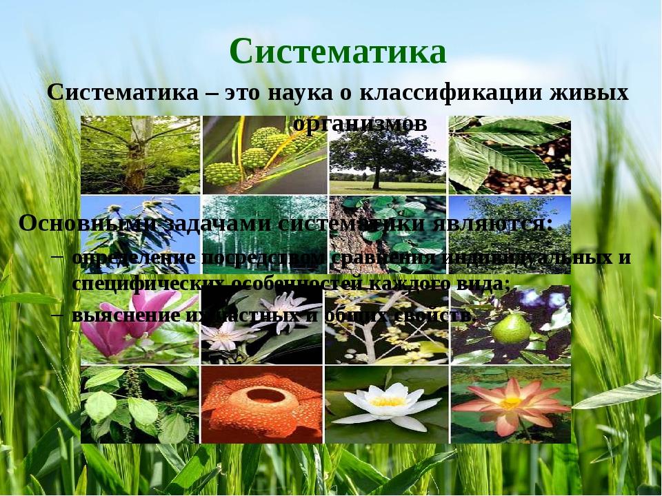 Систематика Систематика – это наука о классификации живых организмов Основным...