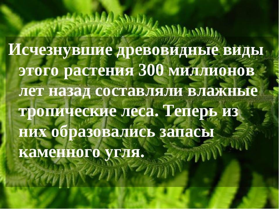 Исчезнувшие древовидные виды этого растения 300 миллионов лет назад составлял...