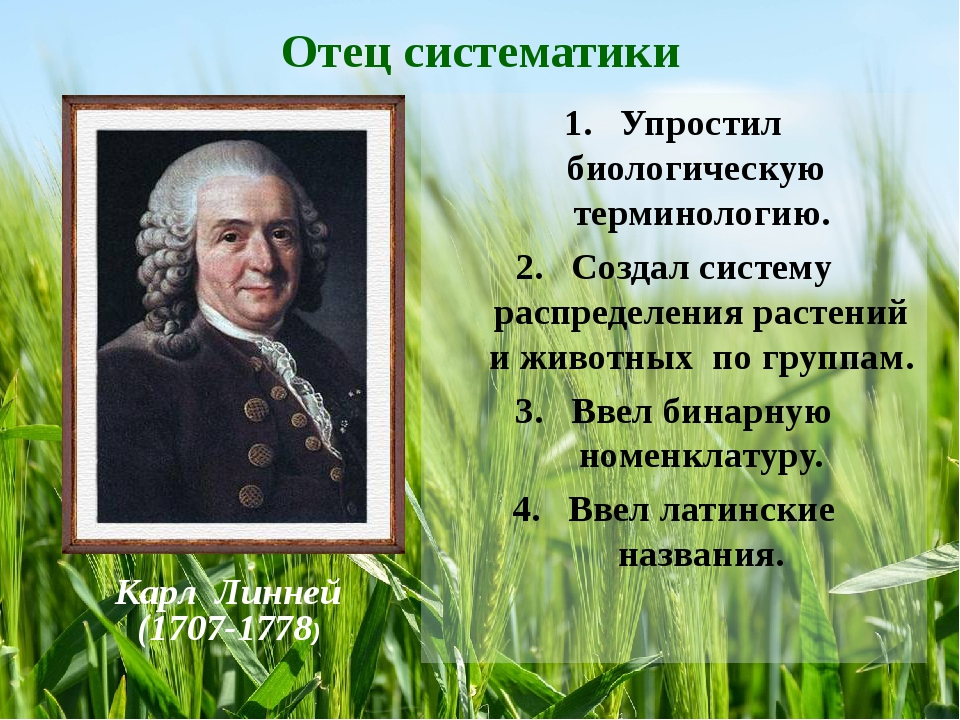 Отец систематики Упростил биологическую терминологию. Создал систему распреде...