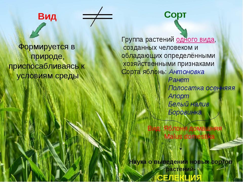 Вид Сорт Формируется в природе, приспосабливаясь к условиям среды Группа раст...