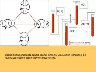 Схема совместимости групп крови. Стрелки указывают, направление группы донорс