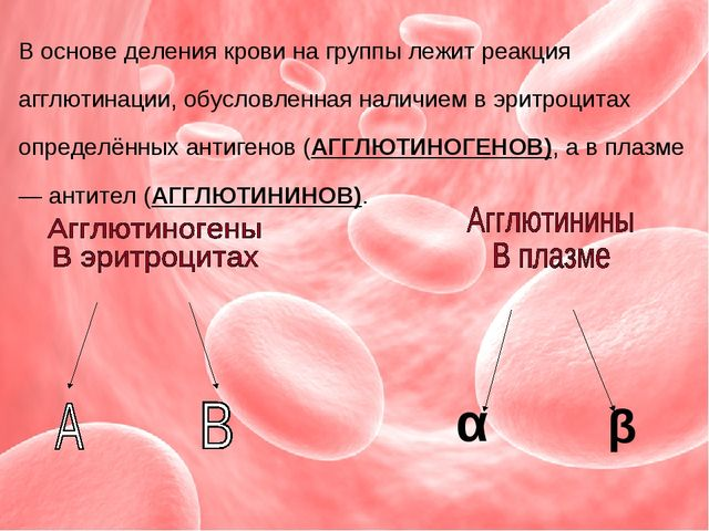 В основе деления крови на группы лежит реакция агглютинации, обусловленная на...
