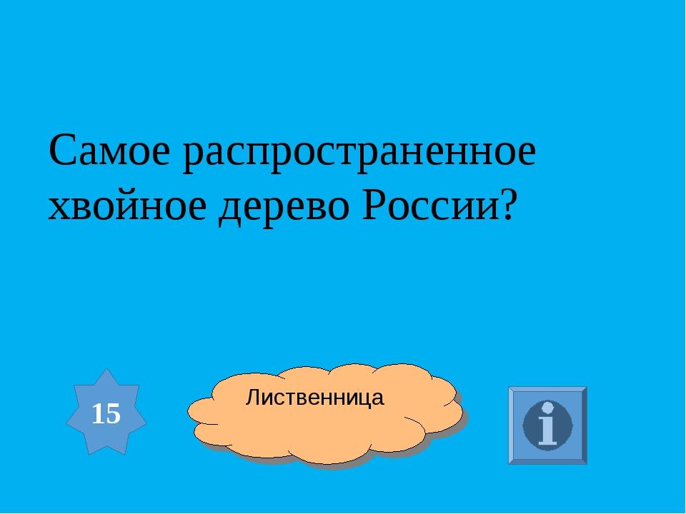 Самое распространенное хвойное дерево России? 15 Лиственница