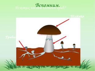 Вспомним. Из каких частей состоит гриб? Шляпка Ножка Грибница