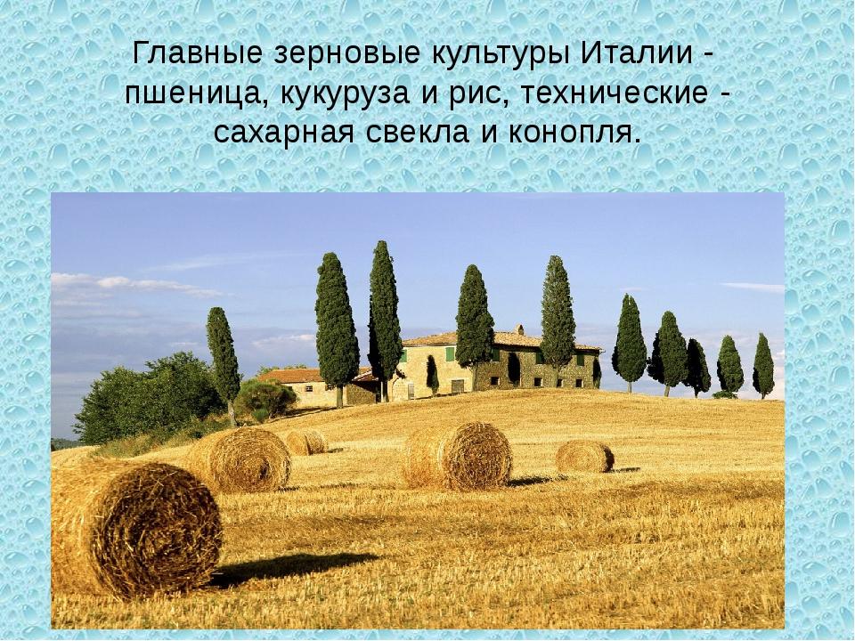 Главные зерновые культуры Италии - пшеница, кукуруза и рис, технические - са...