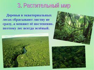 Деревья в экваториальных лесах сбрасывают листву не сразу, а меняют её посте