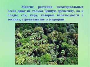 Многие растения экваториальных лесов дают не только ценную древесину, но и
