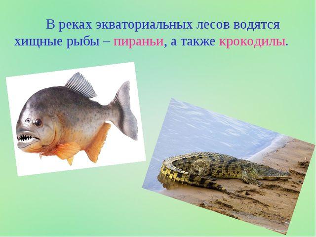 В реках экваториальных лесов водятся хищные рыбы – пираньи, а также крокодилы.