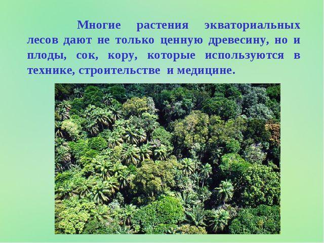 Многие растения экваториальных лесов дают не только ценную древесину, но и...
