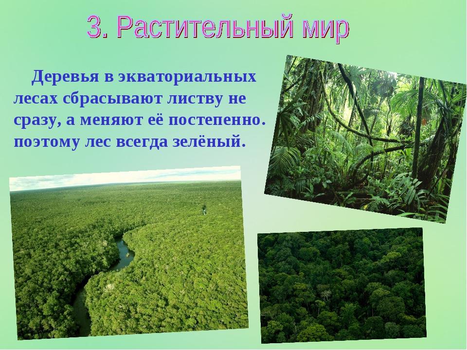 Деревья в экваториальных лесах сбрасывают листву не сразу, а меняют её посте...