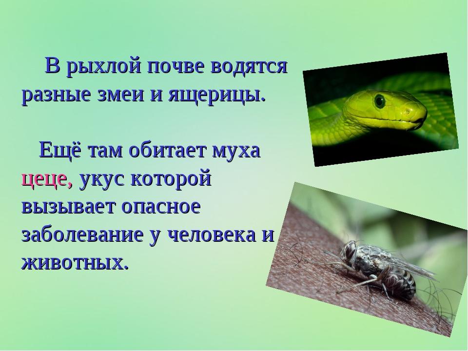 В рыхлой почве водятся разные змеи и ящерицы. Ещё там обитает муха цеце, уку...