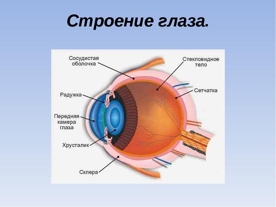 Строение глаза.