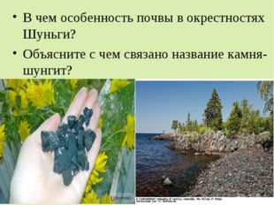 В чем особенность почвы в окрестностях Шуньги? Объясните с чем связано назван