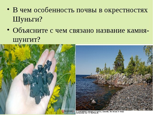 В чем особенность почвы в окрестностях Шуньги? Объясните с чем связано назван...