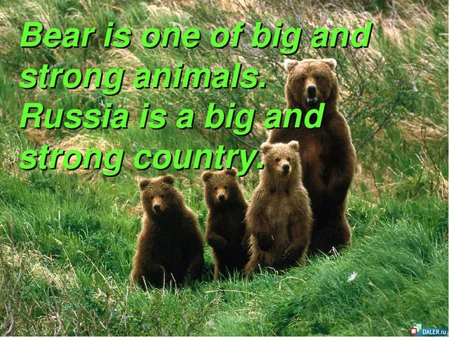 Bear is one of big and strong animals. Russia is a big and strong country.
