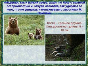 «Медведи, как и всякий зверь, ходят по лесу с великой осторожностью и, зачуяв