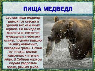 ПИЩА МЕДВЕДЯ * Состав пищи медведя зависит от сезона и урожая тех или иных ко