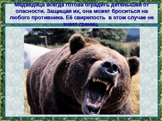 Медведица всегда готова оградить детёнышей от опасности. Защищая их, она може...