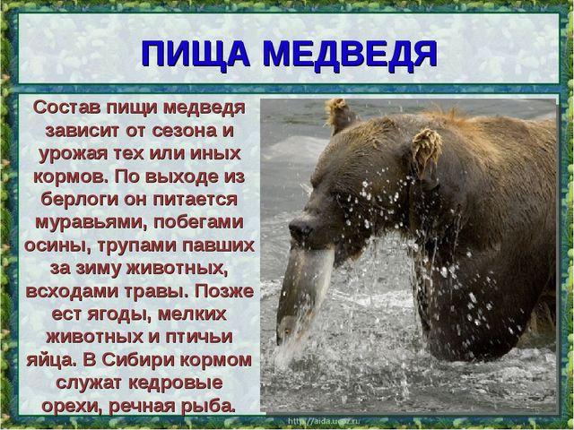 ПИЩА МЕДВЕДЯ * Состав пищи медведя зависит от сезона и урожая тех или иных ко...