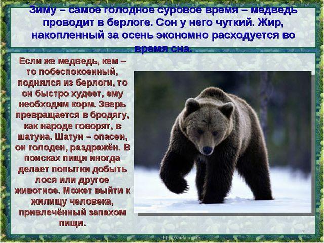 Зиму – самое голодное суровое время – медведь проводит в берлоге. Сон у него...