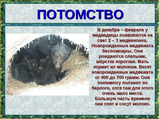 ПОТОМСТВО * В декабре – феврале у медведицы появляются на свет 2 – 3 медвежон...