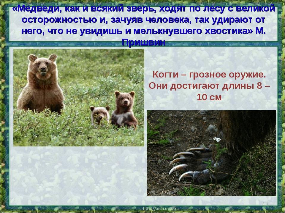 «Медведи, как и всякий зверь, ходят по лесу с великой осторожностью и, зачуяв...