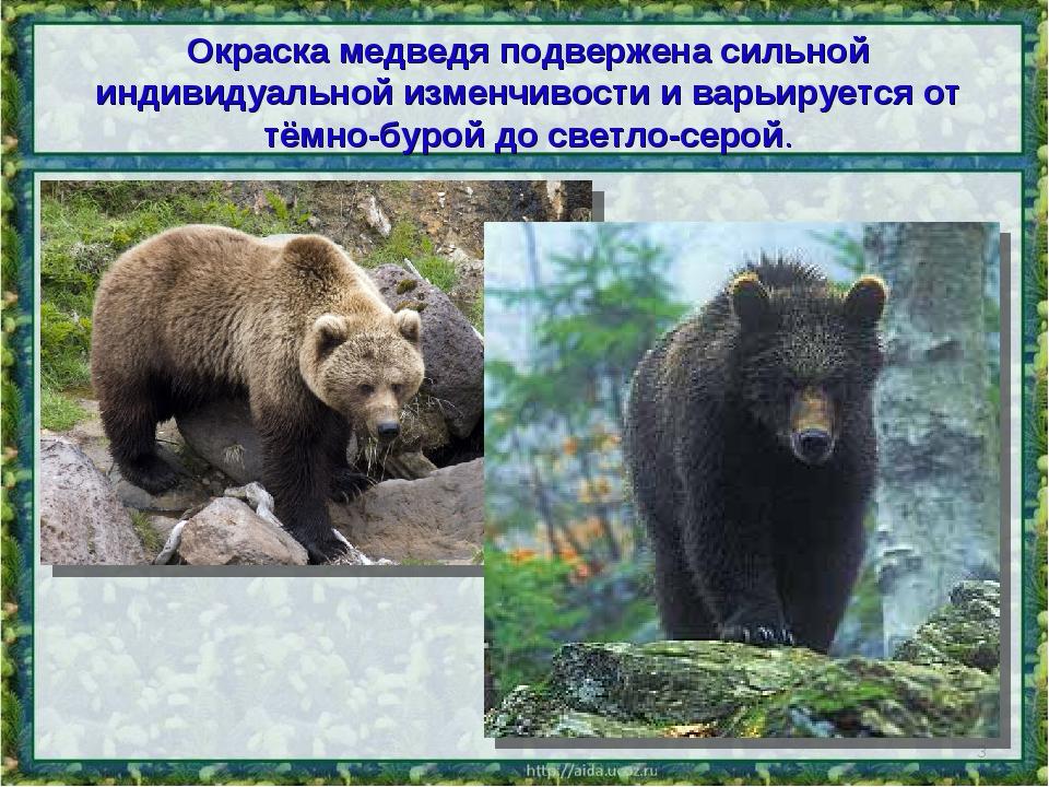 Окраска медведя подвержена сильной индивидуальной изменчивости и варьируется...
