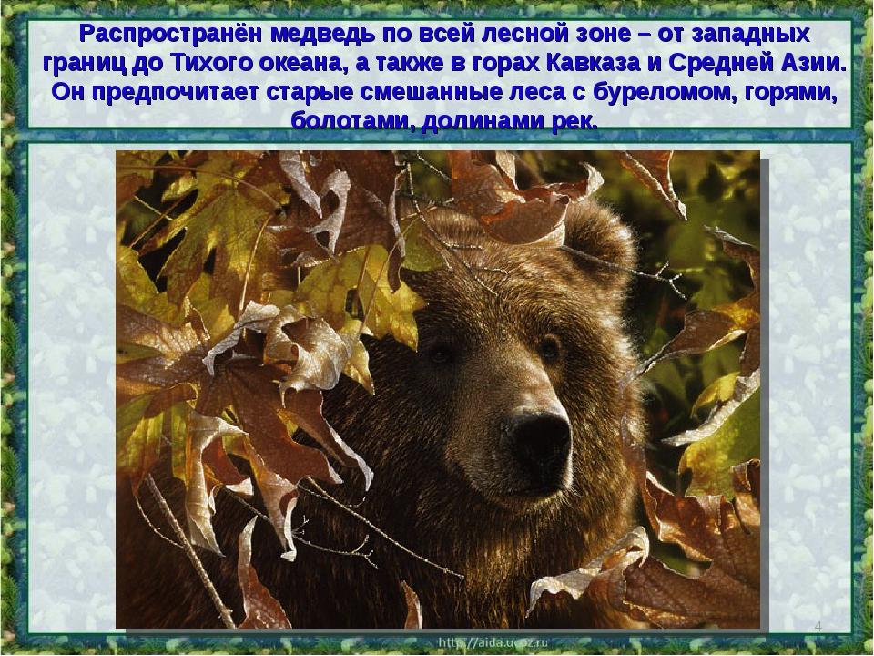 Распространён медведь по всей лесной зоне – от западных границ до Тихого океа...