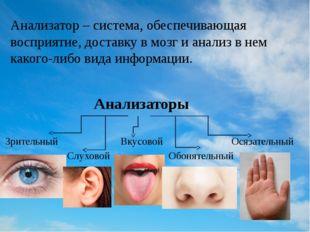 Анализатор – система, обеспечивающая восприятие, доставку в мозг и анализ в н