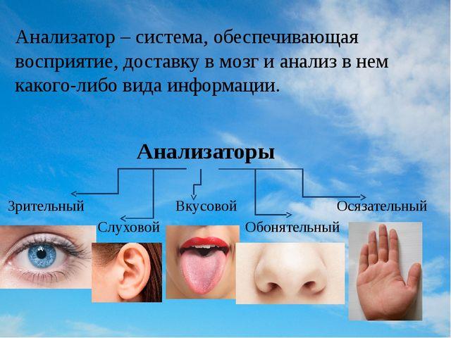 Анализатор – система, обеспечивающая восприятие, доставку в мозг и анализ в н...
