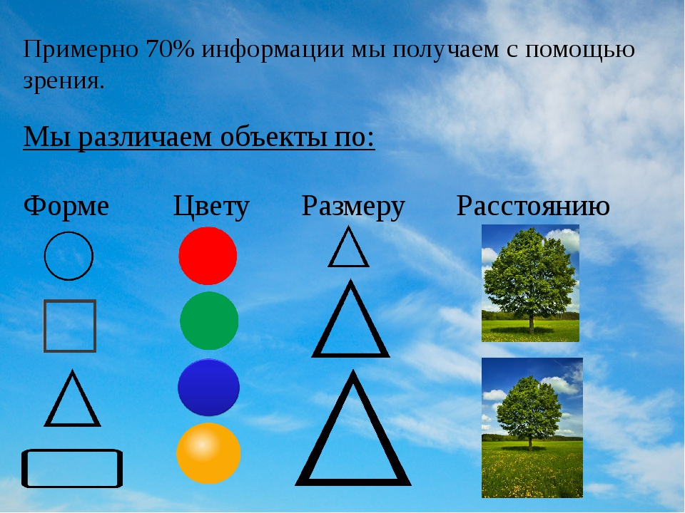 Примерно 70% информации мы получаем с помощью зрения. Мы различаем объекты по...