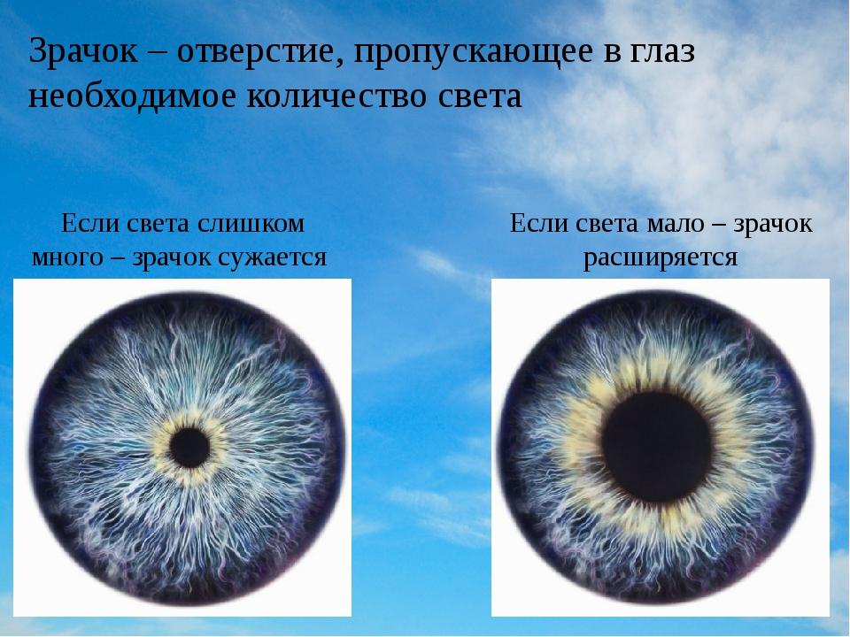 Зрачок – отверстие, пропускающее в глаз необходимое количество света Если све...