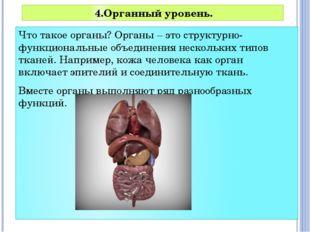 Что такое органы? Органы – это структурно-функциональные объединения нескольк