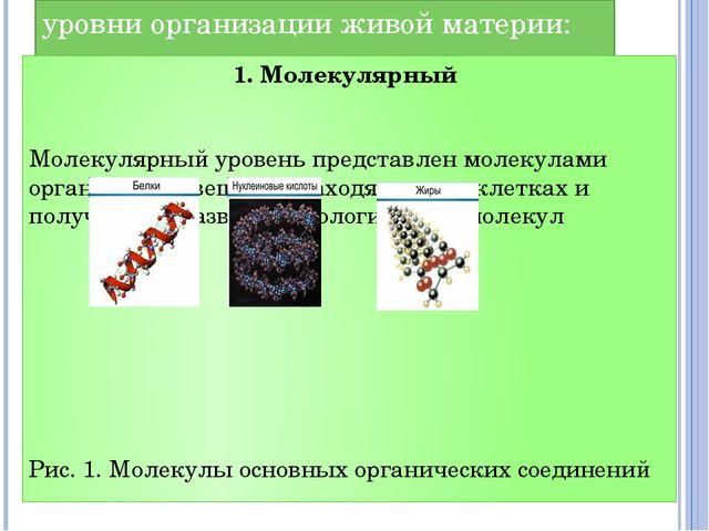 уровни организации живой материи: 1. Молекулярный Молекулярный уровень предст...