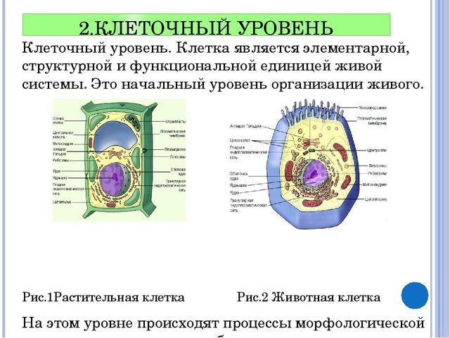 2.КЛЕТОЧНЫЙ УРОВЕНЬ Клеточный уровень. Клетка является элементарной, структур...