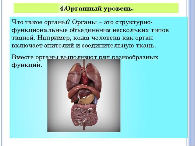Что такое органы? Органы – это структурно-функциональные объединения нескольк...