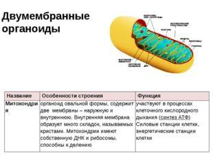 Двумембранные органоиды Название Особенности строения Функция Митохондрия орг