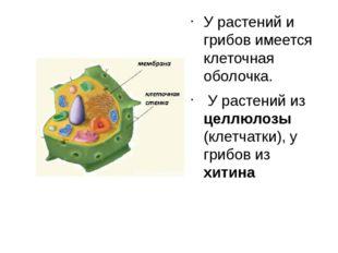 У растений и грибов имеется клеточная оболочка. У растений из целлюлозы (клет