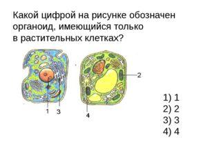 Какой цифрой на рисунке обозначен органоид, имеющийся только врастительных к